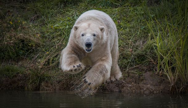 Photo free polar bear, animal, predator