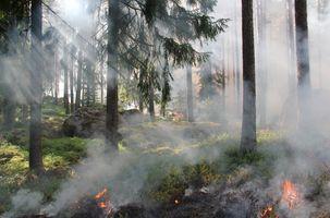 Фото бесплатно дерево, лес, дым