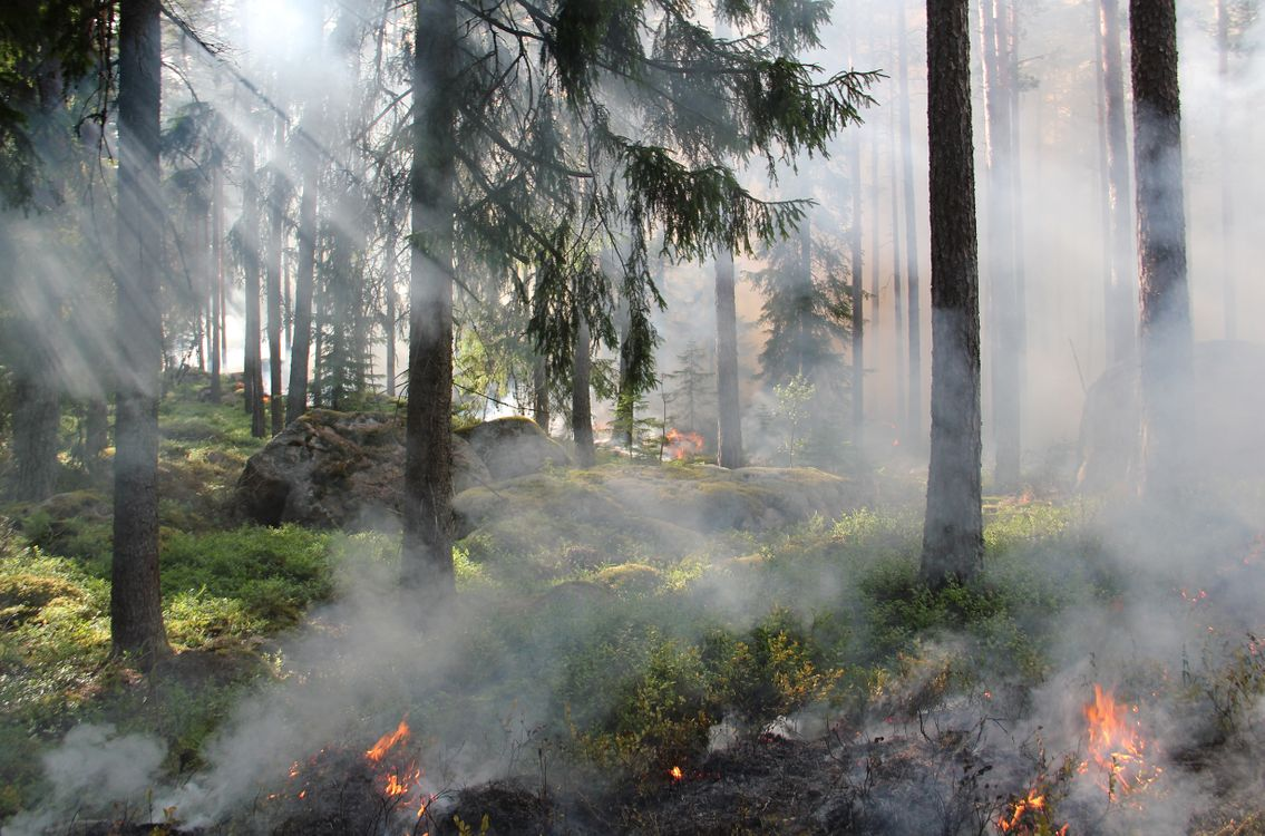 Фото дерево лес дым - бесплатные картинки на Fonwall