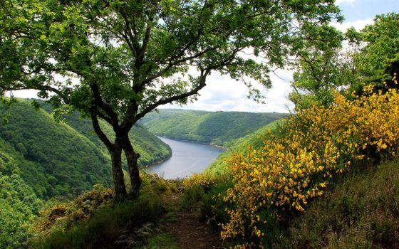 Photo free flowers, greenery, hills