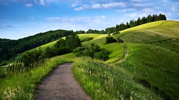 Photo free forest, green, hills