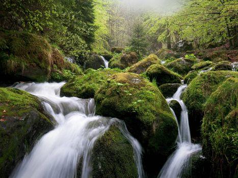 Photo free tree, moss, river