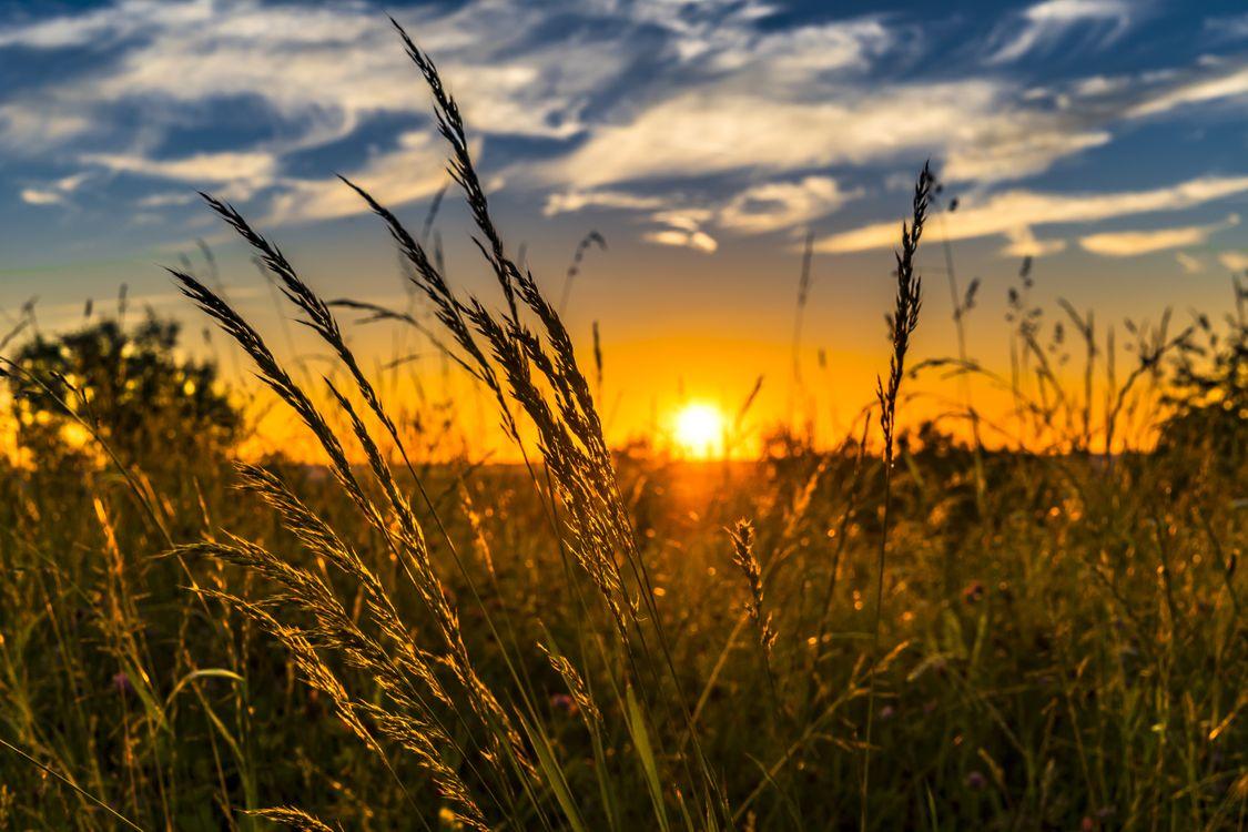 Фото трава горизонт облако - бесплатные картинки на Fonwall