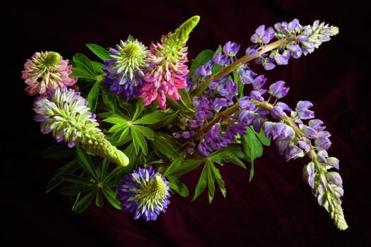 Заставки цветы, букет, люпин