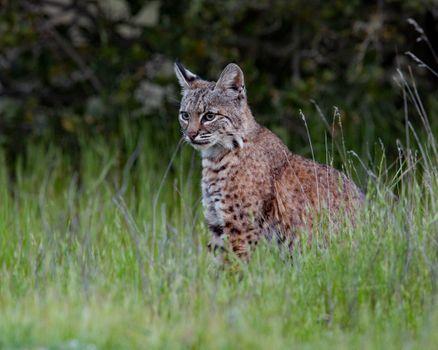 Screensaver predator, animal free download