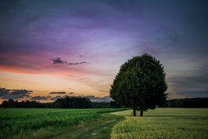 Бесплатные фото закат,поле,деревья,дерево,дорога,трава,небо