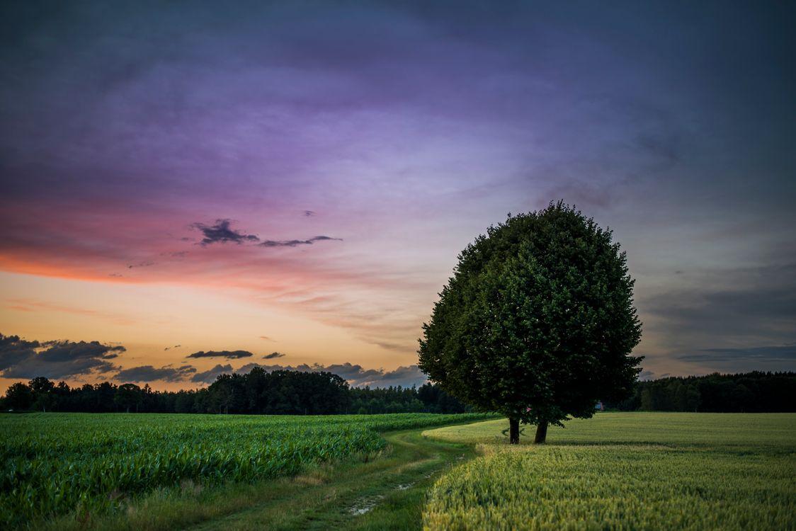 Фото бесплатно закат, поле, деревья, дерево, дорога, трава, небо, природа, пейзаж, пейзажи