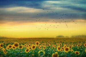 Фото бесплатно пейзаж, поле, птицы