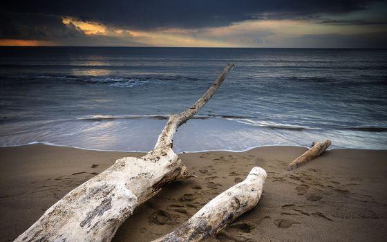 Photo free ocean, waves, dry tree