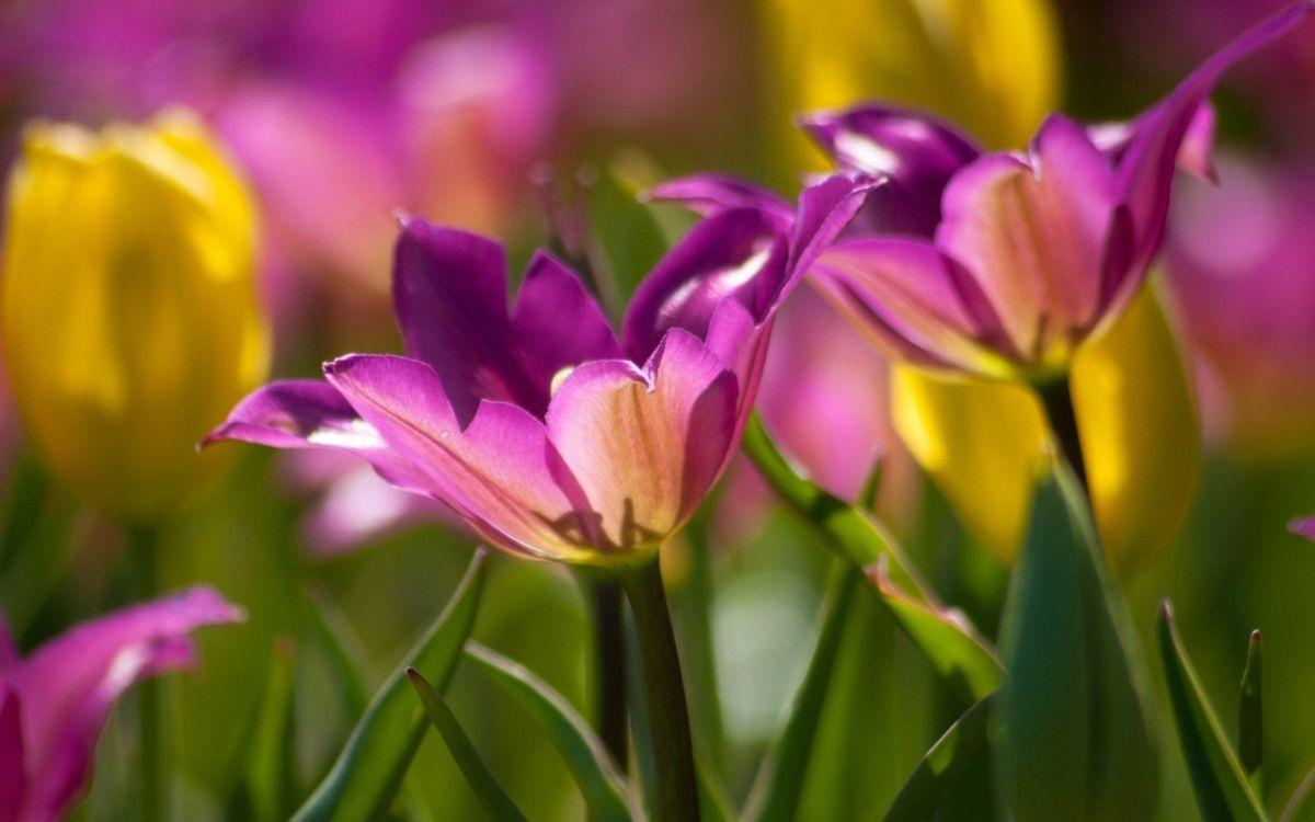Фото бесплатно лист, цветок, разрешение - на рабочий стол