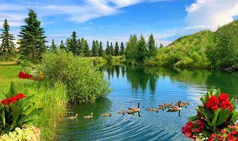 Бесплатные фото река,вода,цветы,берег,гуси,лодка,деревья