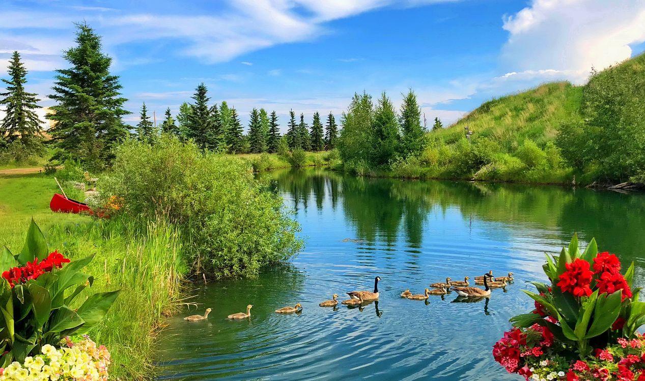 красивые картинки лето солнце река