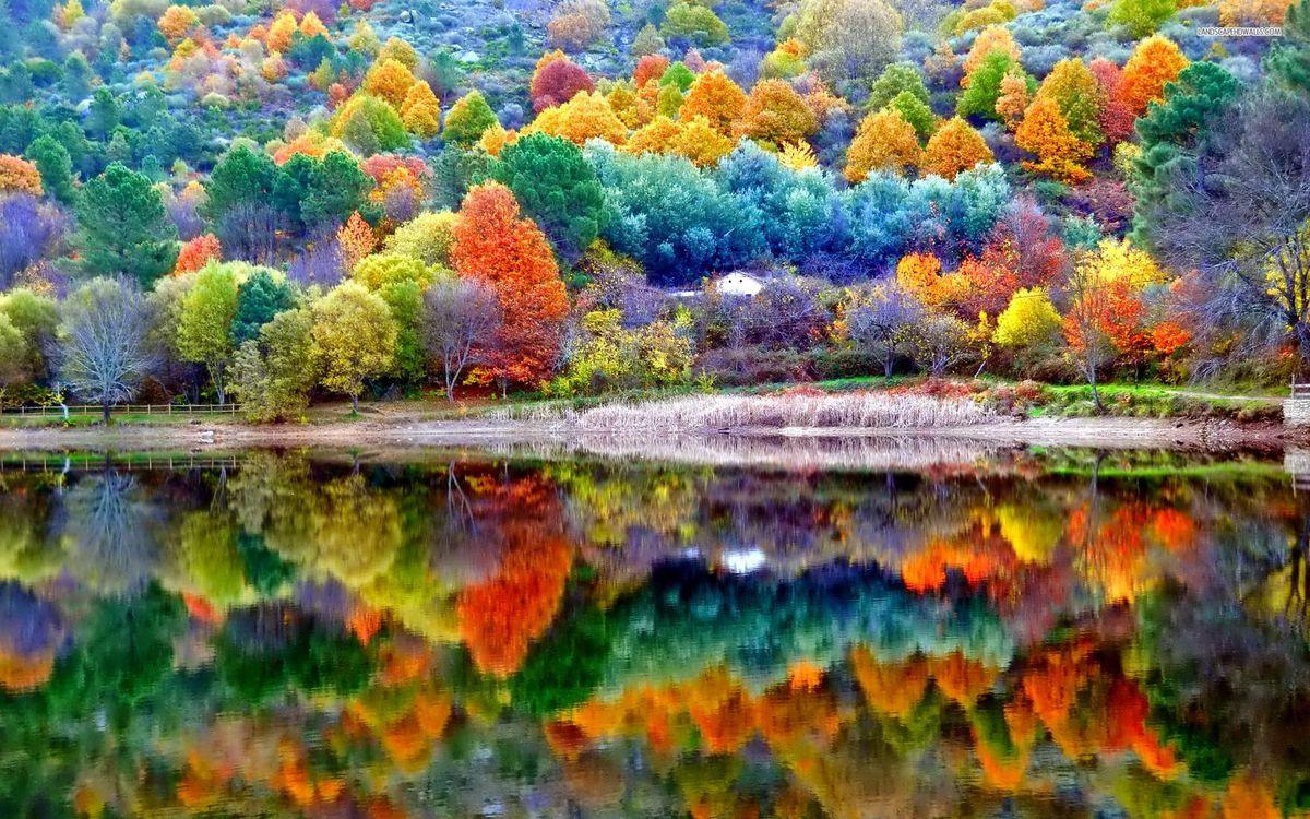 Фото бесплатно земные красоты, листья, осень - на рабочий стол