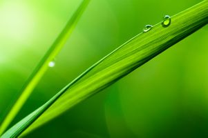 Фото бесплатно глубина съемки, капли, трава