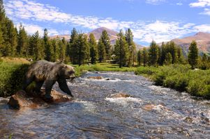 Бесплатные фото Grizzly,bear,медведь,река,камни,лес