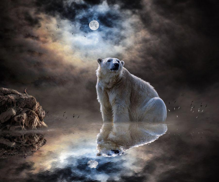Фото бесплатно полярный медведь, океан, медведь, полярных, животное, север, мех, хищник, небо, луна, сумерки, белый медведь, art, животные