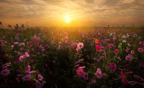 Закат на цветочном поле · бесплатное фото