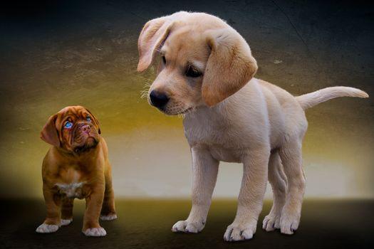 Фото бесплатно животные, собаки, щенки