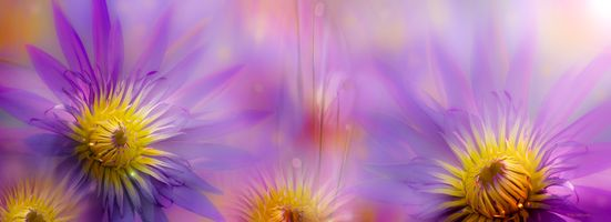 Размытые цветки лотоса