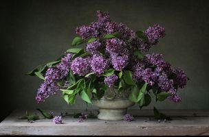 Бесплатные фото натюрморт,ваза,цветы,стол,сирень