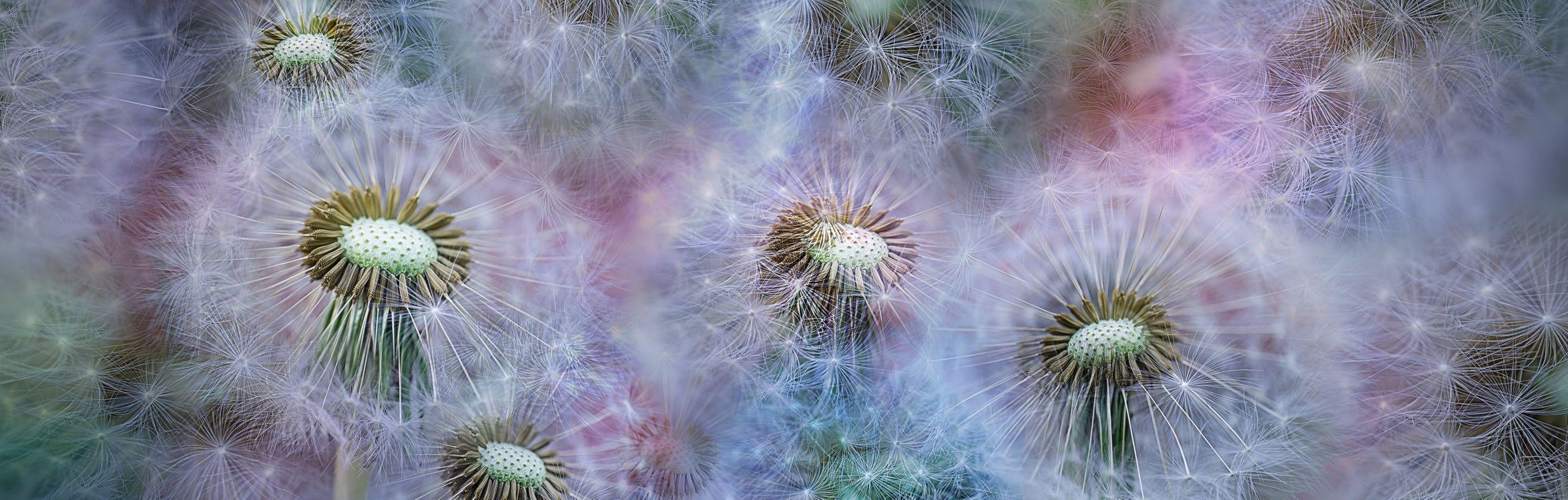 Фото бесплатно панорама, цветочная композиция, макро - на рабочий стол