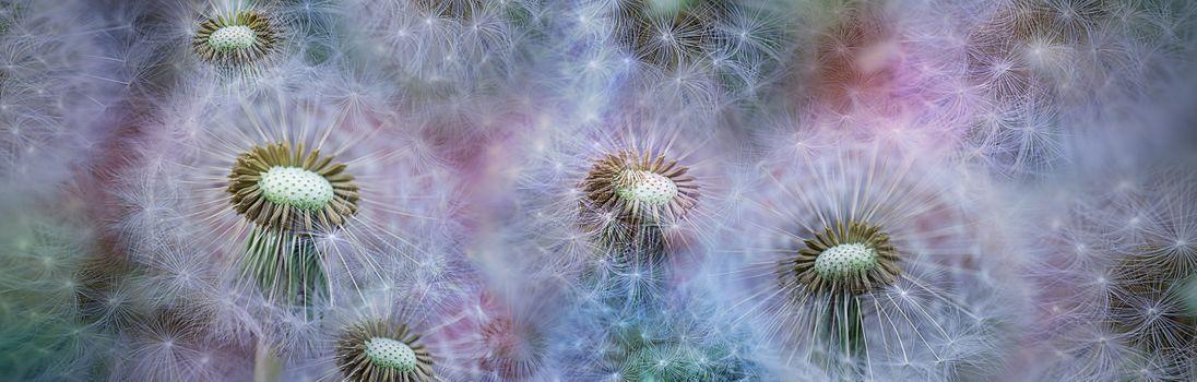 Фото бесплатно панорама, цветочная композиция, макро