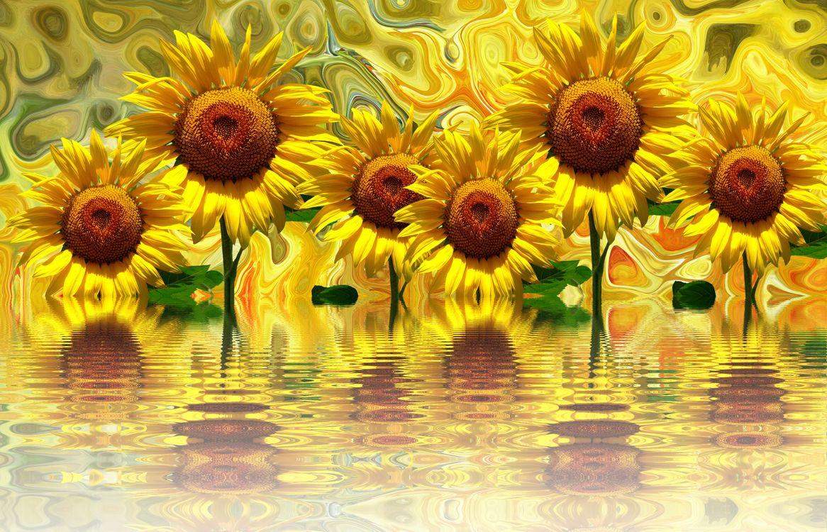 Фото бесплатно подсолнух, подсолнухи, цветы, флора, цветы
