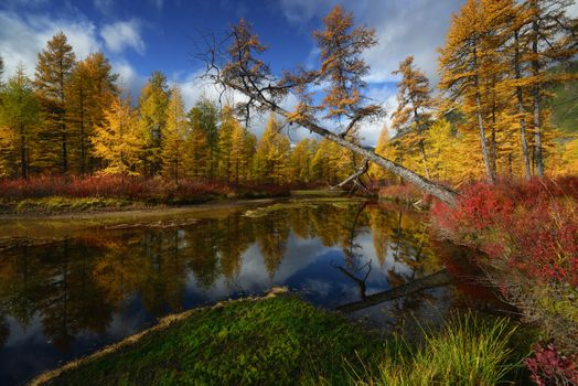Яркие краски осени · бесплатное фото