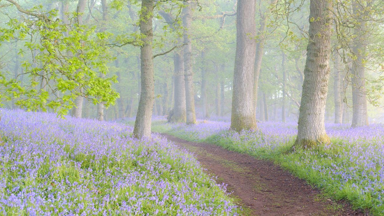 Туманный утренний лес с цветами · бесплатное фото