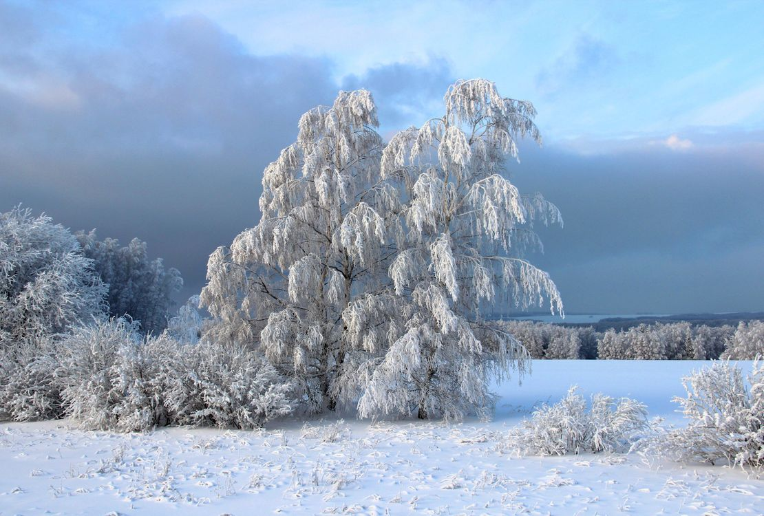 зимушка зима · бесплатная заставка