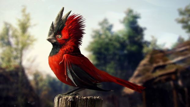 Photo free bird, red, tuft