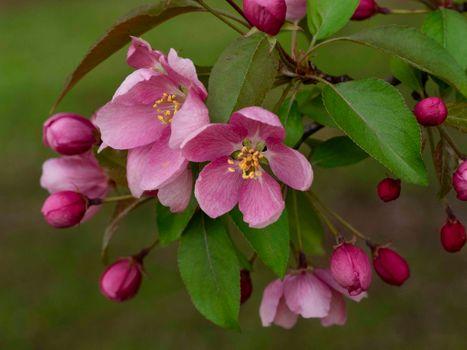 Бесплатные фото цветущая ветка,цветы,листья,цветение,флора