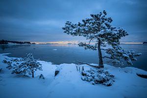 Бесплатные фото Хельсинки,Вуосаари,ПЕЙЗАЖ,зима,водоём,дерево