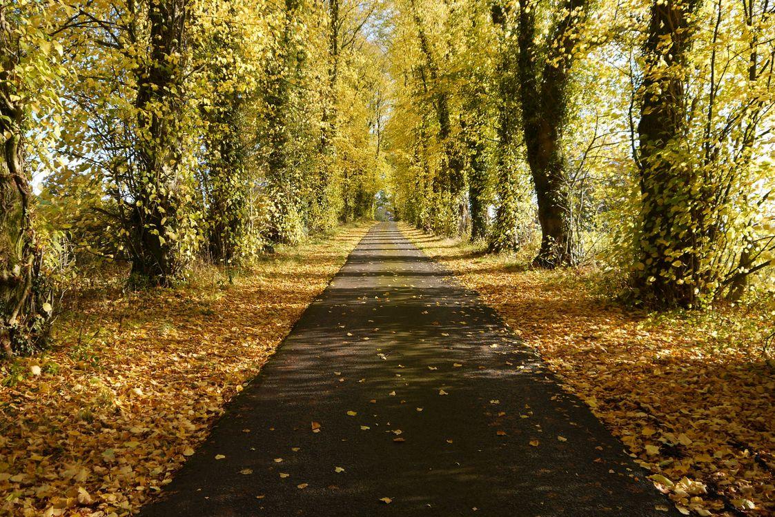 Обои лес, осенние листья, осень картинки на телефон