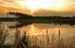 Бесплатные фото Отдых,озеро,вечер,закат,деревья,тростник