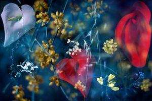 Фото бесплатно цветы, макро, поле
