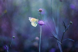 Фото бесплатно поле, цветы, манипуляции
