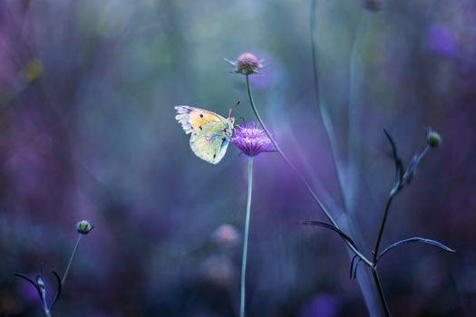 Заставки поле,цветы,манипуляции,природа,разнообразие,трава,растения,макро бабочка