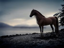 Horse on the river Bank