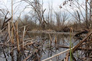 Заставки болото, вода, сухостой