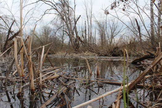 Фото бесплатно болото, вода, сухостой