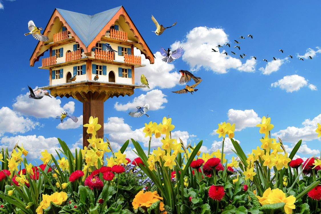 Фото бесплатно эмоции, весна, природы, животные, птицы, цветы, весеннее настроение скворечник, синица, дятел, гусей, летающий, нарциссы, osterglocken, гуси цветок, облака, цветы