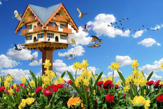 Бесплатные фото эмоции,весна,природы,животные,птицы,цветы,весеннее настроение скворечник,синица,дятел,гусей,летающий,нарциссы