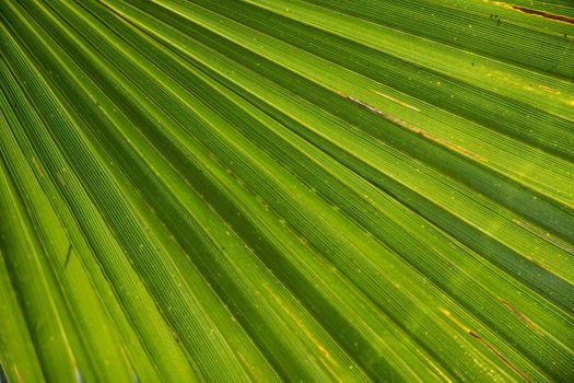Фото бесплатно пляж, трава, состав