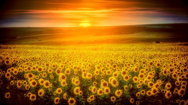 Бесплатные фото закат солнца,подсолнухи,поле,цветы,пейзаж,Girasoles de Castilla
