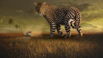 Заставки живая природа, леопард, пятна