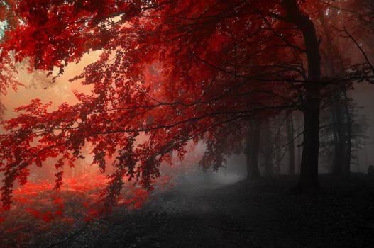 Фото бесплатно красное дерево, осень, туман