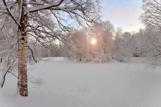 Снежная природа