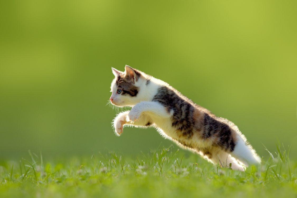 Фото бесплатно котенок, прыжок, газон - на рабочий стол