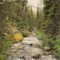 Фото бесплатно река, лес, деревья, камни, течение, природа, пейзаж